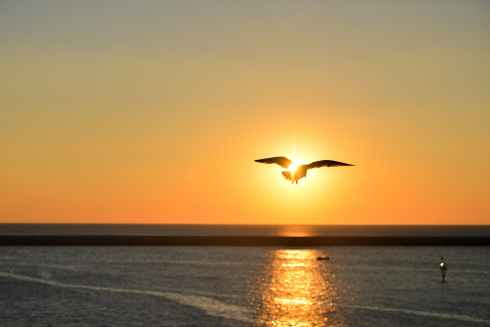sea-sunset-bird-flying.jpg